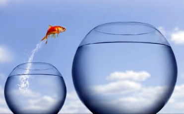 A Leap of Faith 1_Goldfish_small_to_large_bowl