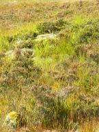glen, Buachaille Etive Mor, east of Glen Coe