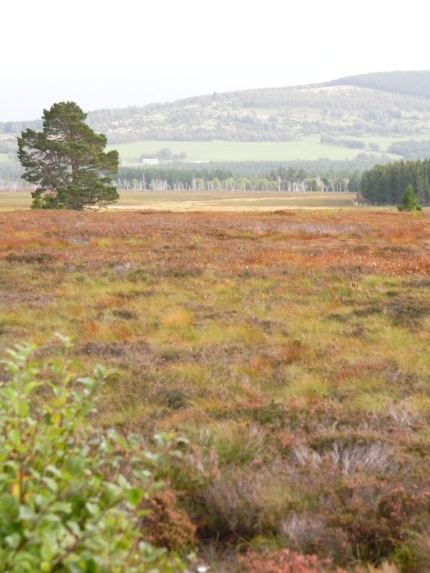 moor by carriageway nr Aviemore, Cairngorms