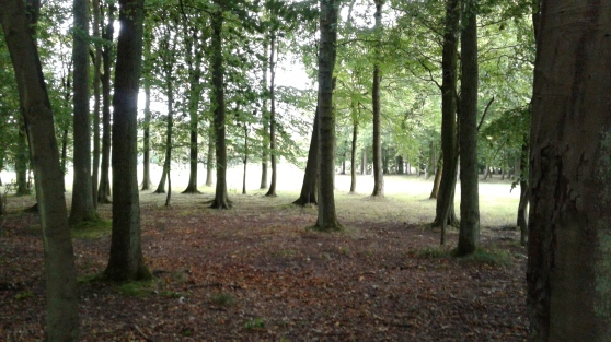 Pollok Country Park, glade similar to the one filmed, near golf fairway. Image by C. L. Tangenberg
