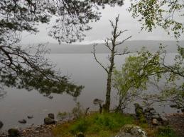 Loch Rannoch, south shore, Image C. L. Tangenberg