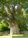large tree, mid graveyard. Image by C. L. Tangenberg