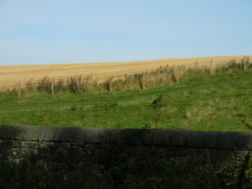 hillside where Jamie forked hay
