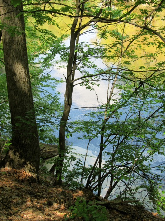 IMG_1617_water-sky-trees-blue-yellow
