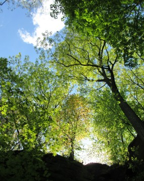 IMG_1636_upward-backlit-trees-sky-vertical-orientation