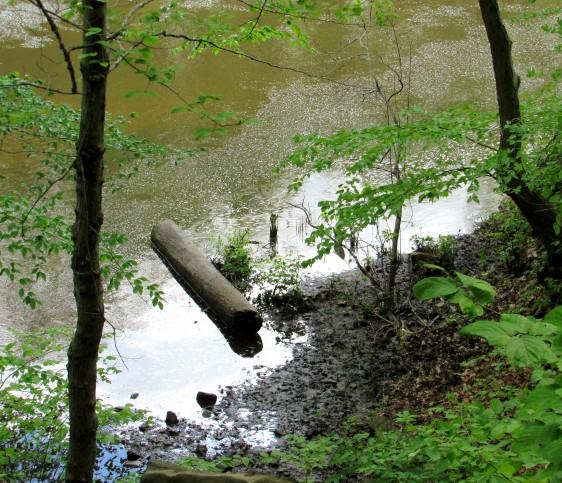 IMG_1717_log-on-river-shore