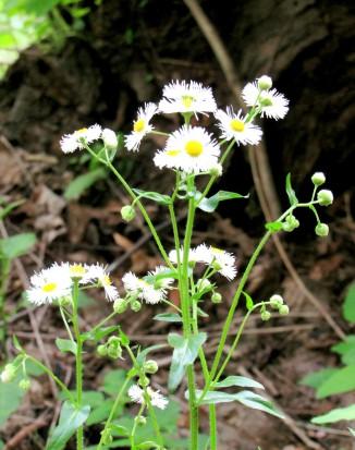 IMG_1745_wildflowers