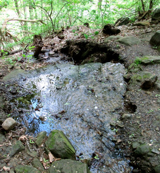 IMG_1769_water-stream-ravine