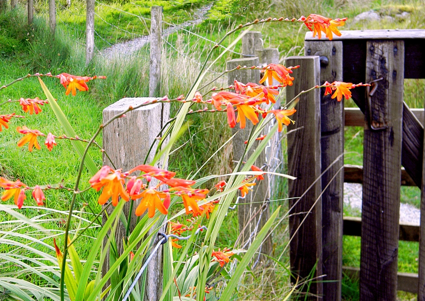 Dunadd-entrance-orange-flowers-fence_V-gift-edits-2018-10-30_DSCN3372_2017-12-27
