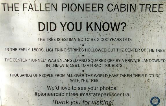 Fallen-Pioneer-Cabin-Tree-placard-2018-10-06_edits-IMG_6335