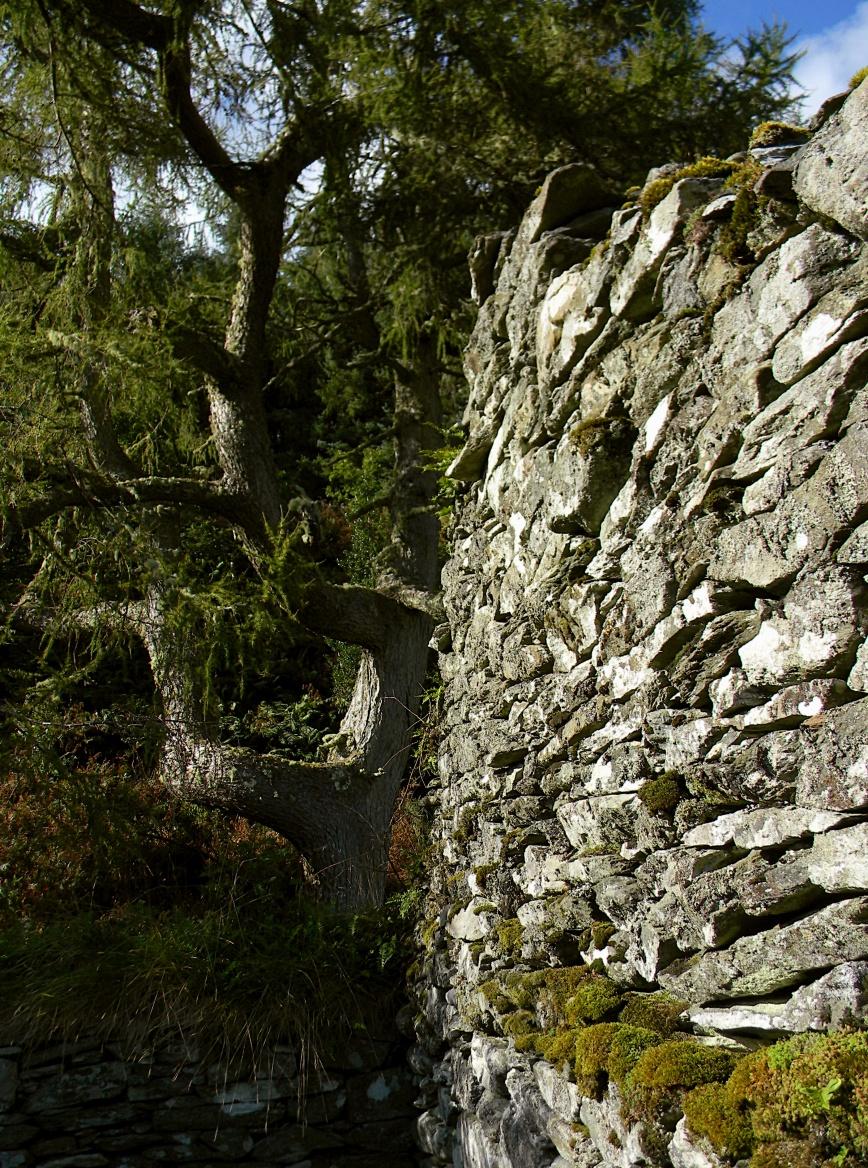 Kilmory-Oib-cypress-left-high-wall-rt-moss-sky_edits-2018-10-30_DSCN3337