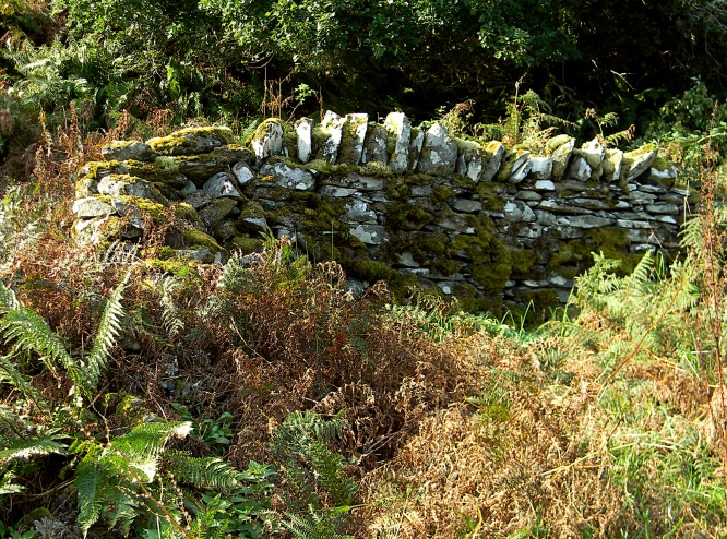 Kilmory-Oib-jagged-upright-stones-row_back-of-chamber_fern-lwr-lft_edits-2018-10-30_DSCN3328